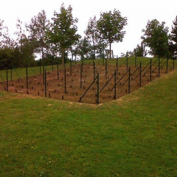 Laithwaites plants UK's smallest vineyard