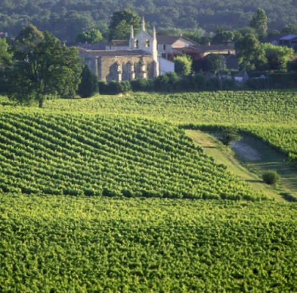 Millions of Chinese government money spent on vineyards