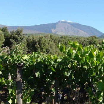 Vineyards close to Mount Etna in Sicily