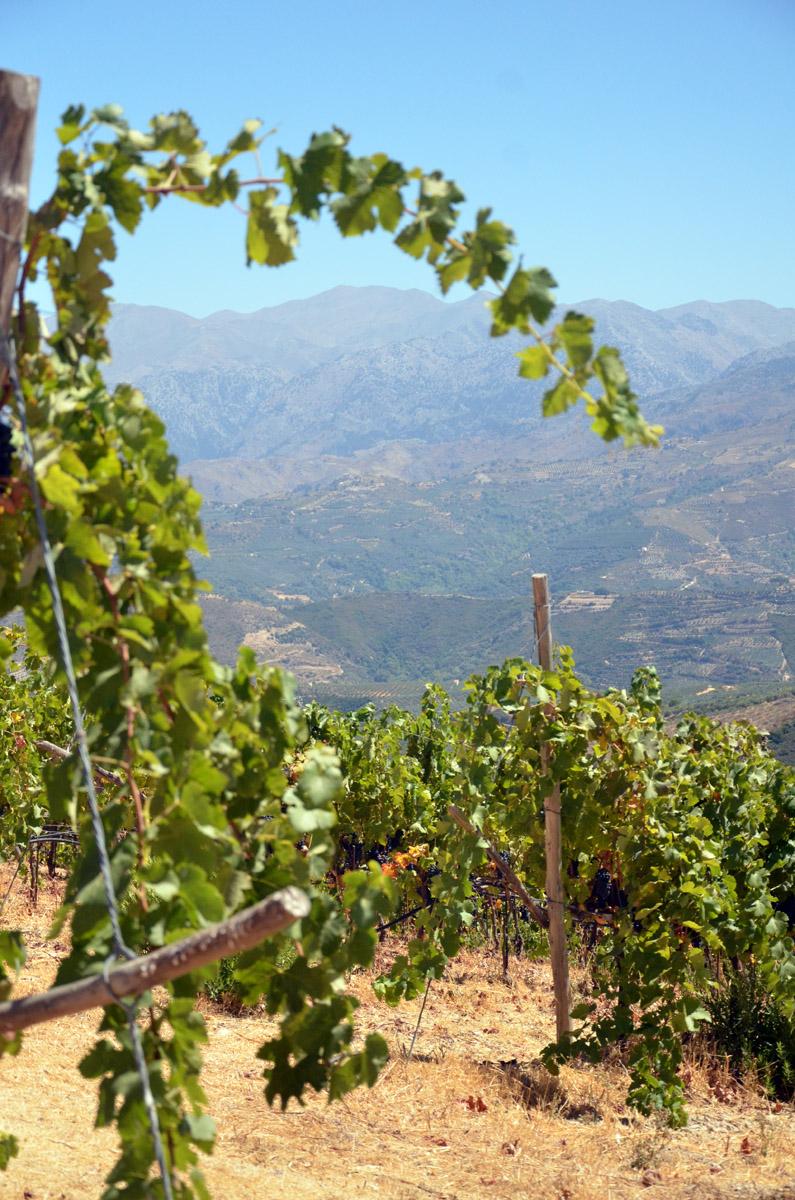 Manousakis Vineyards