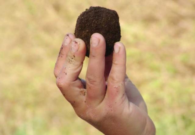 Dirt-hand