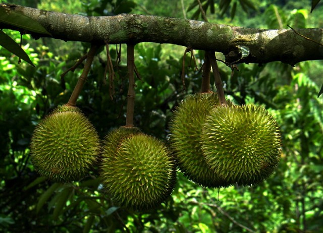 The divisive durian fruit has been turned into a wine