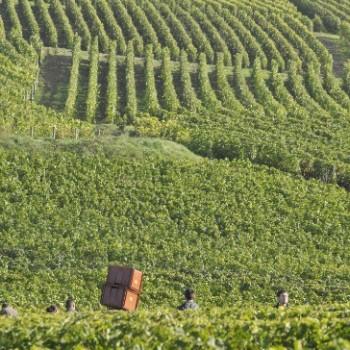 Vineyards-copy
