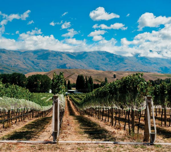 NZ wine industry launches WiSE