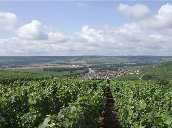 Champagne: 2013 vintage could be a '96