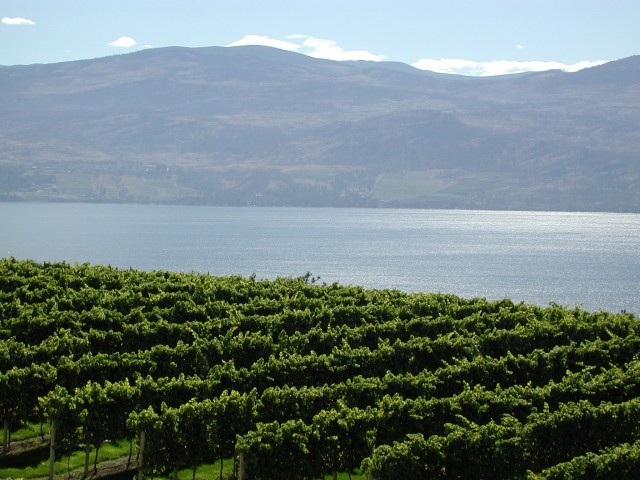 Vineyards_Lake_Okanagan