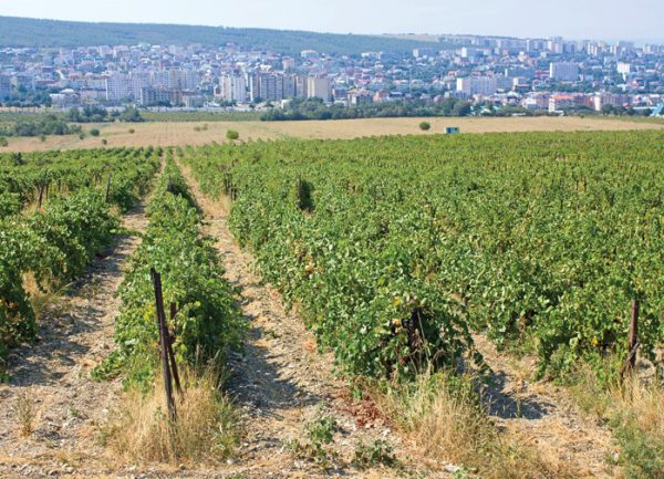 Russia to almost double vineyards by 2020