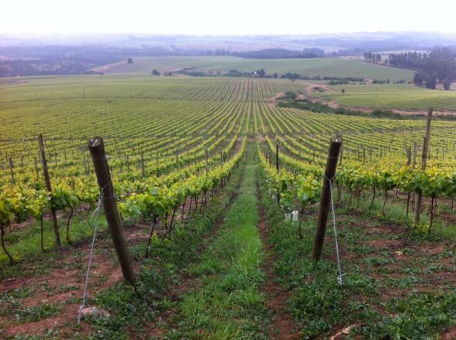 Santa Rita Estates' Leyda vineyard, one of the worst hit areas
