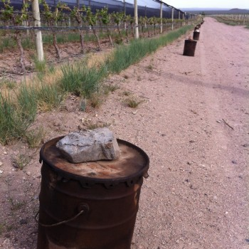 Heaters guard against frost at Doña Paula's Los Indios vineyards in Uco Valley