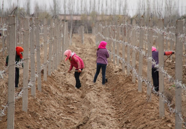 Chinese viticulture hampered by high costs