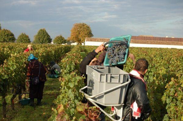 Bordeaux 2013: 'a joyous triumph over adversity'