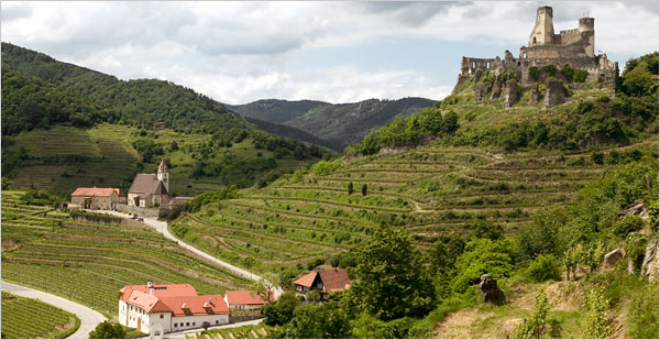 Senftenberger Piri vineyard in Senftenberg, Austria