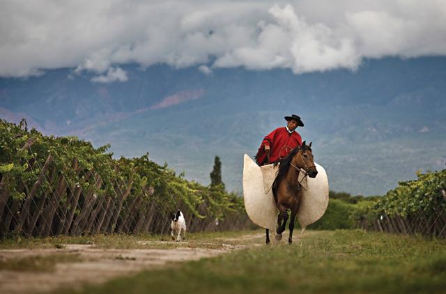 Argentina-Horse-Gaucho-Dog