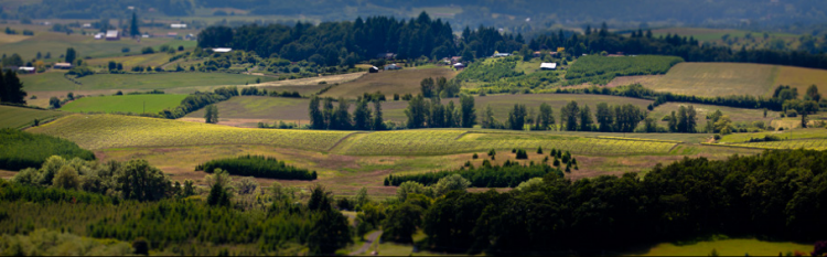 Goodrich Road Vineyard, a 69-acre property recently bought by Elk Cove. Photo credit: Russ Widstrand Photographer