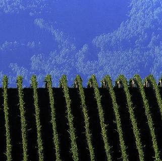 Photo credit: Wine Australia