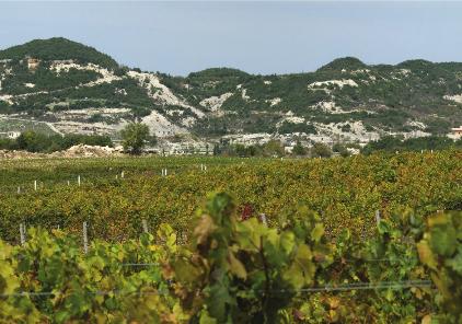 The Bargylus vineyards