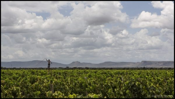 Wine Explorers: The vineyards of Ethiopia