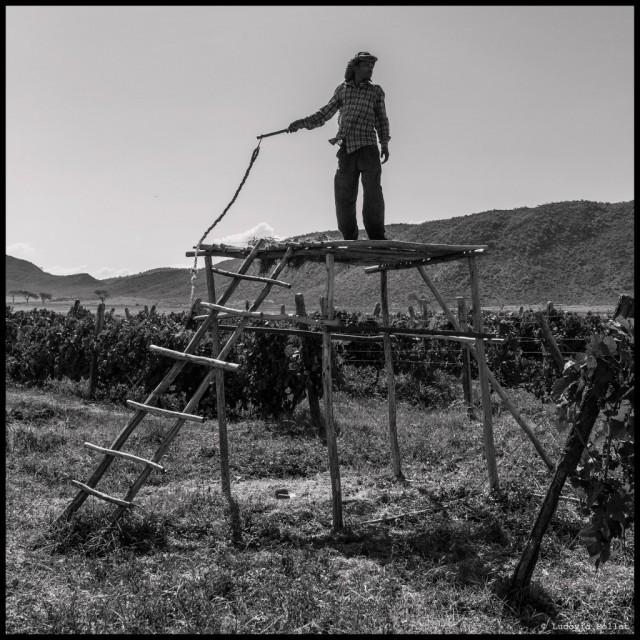 9-Ethiopia-how-to-scare-birds-Castel-vineyard1-1024x1024