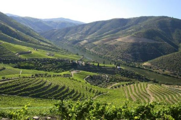 Portugal hopes to repeat Super Tuscan feat