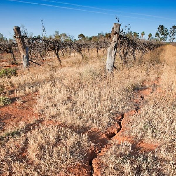 Winemakers must prepare for temperature extremes