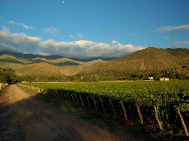 ruta-del-vino-en-en-norte-salta-01fcab7d73d48bdd98844045075f340f-42258f3aa37794908ffad14f9a522388