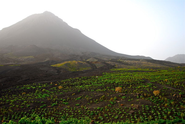 vignoble-with-the-volcan---www.vinhamariachaves.eu