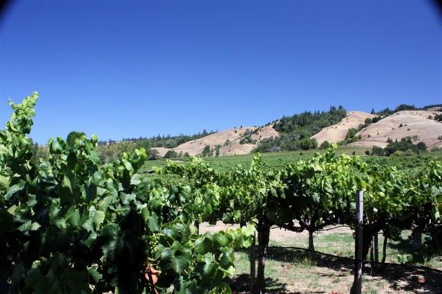Vineyard_in_Anderson_Valley