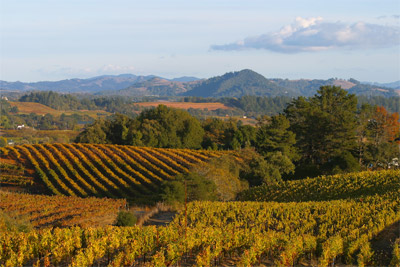 Sonoma vineyards: in demand