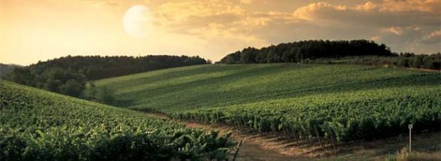 Solaia vineyard in Tuscany