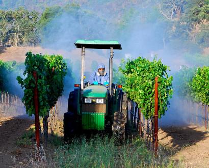 Spraying-vineyard