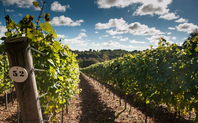 Hambledon Vineyard in Hampshire, which came top in the blind tasting