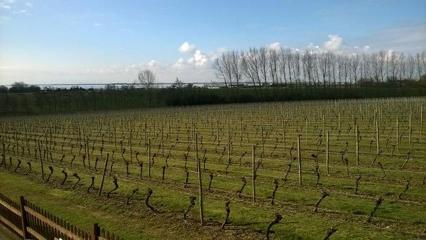 Roger Barber, owner of Mersea Island Vineyard, has defended his right to use the trademark for Champale beer following a two-year dispute with the CIVC (Photo: Mersea Island Vineyard)