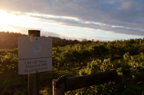 Old Hill Vineyards, Mount Pleasant. Credit: Mount Pleasant Wines