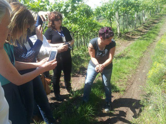 10 - Soave soil