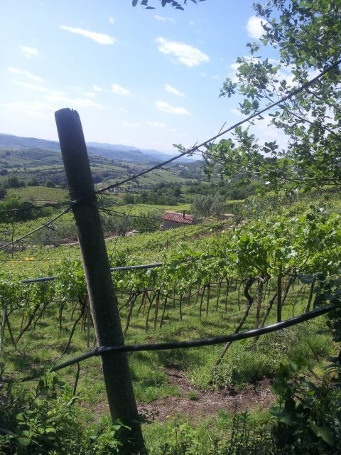 13 - Soave view