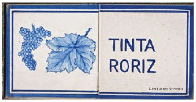 tinta-roriz-01