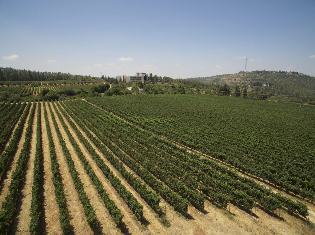 vineyards-credit-elad-barmi