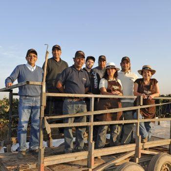 casa-real-vineyard-workers-mid-res