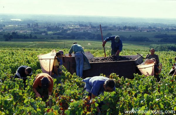 Beaujolais hopes for a 'long overdue renaissance' in Asia