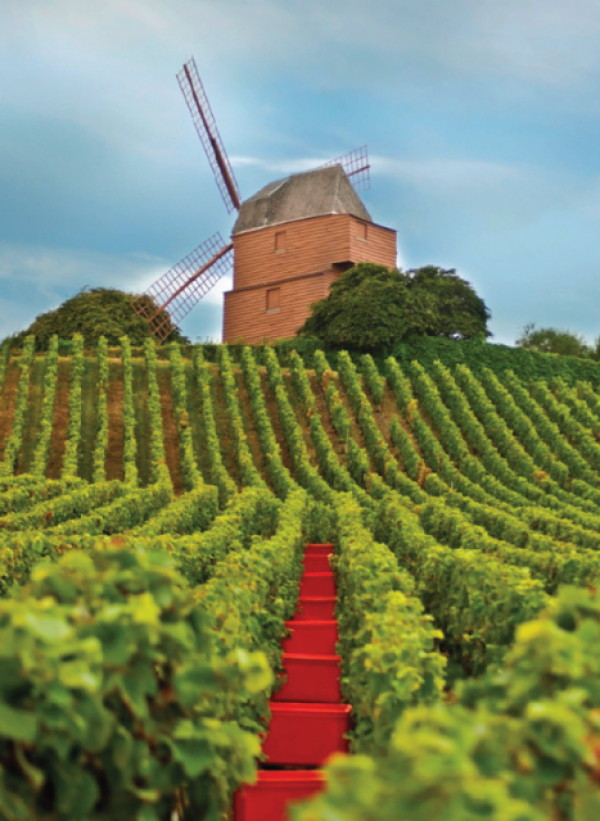 What is the real cost of producing Champagne?