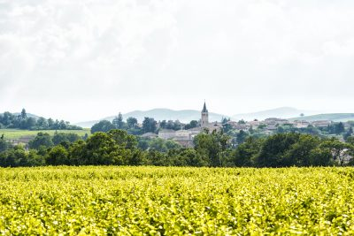 "Beaujolais revisited: ""understanding of the terroir is driving better quality wines"""