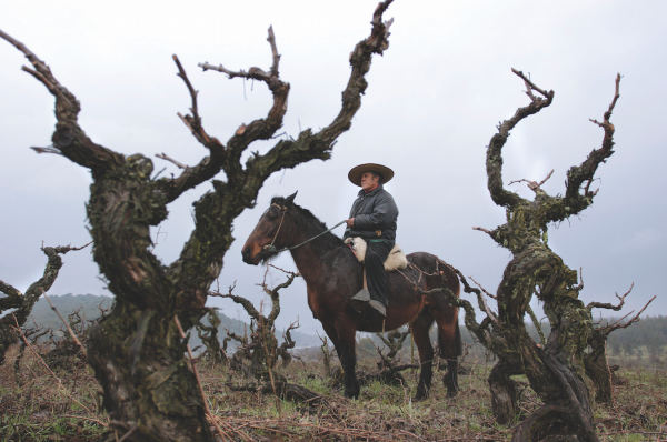 10 reasons to get excited about Chilean wine right now