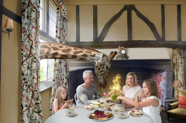 Giraffe hotel in Kent to specialise in English wines