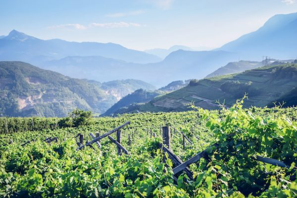 Trentodoc Classic Method from the Dolomites is Sparkling Wine at its Peak