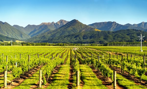 NZ wine delivers strong performance in UK off-trade