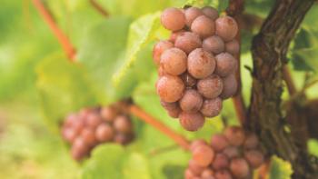 Top 10 best Pinot Grigios of 2021