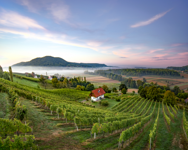 Austria reflects on 'challenging yet rewarding' 2020 vintage