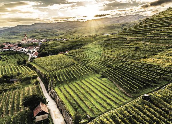 Seven reasons to drink Austrian wine