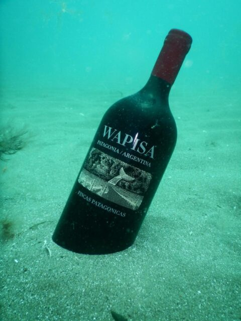 A bottle of wine ageing underwater