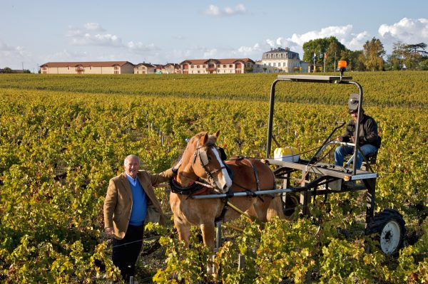 Top Bordeaux châteaux are going organic